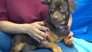 Sheriff A4452397 Rescued!!!