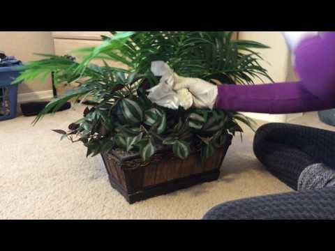 ASMR Cleaning Dusting Wiping Plant (no Talking)
