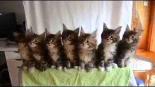 MIABI - gatitos bailarines ♥
