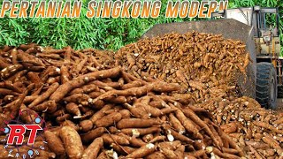 MODERN CASSAVA FARMING  | Cultivation and Harvesting of Cassava