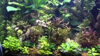 90 Gallon Freshwater  Aquarium Heavily Planted Diy Co2 3mth Update