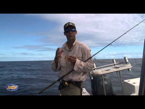 How to catch Snapper - Fishing - BCF