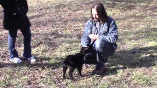 How to Potty Train a Goat and Teach it Fun Tricks