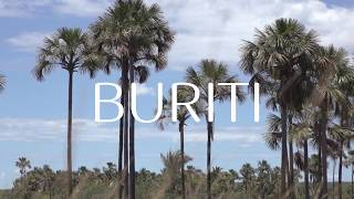 Ekos Buriti