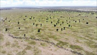 【ドローン絶景】 アフリカ・タンザニア 想像を絶する大自然のスケール  Africa tanzania