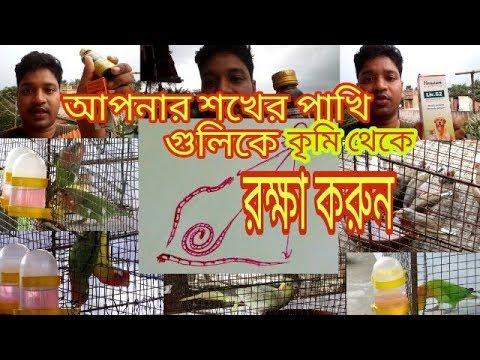 Deworming Your Birds#কৃমি#থেকে রক্ষা করুন শখের পাখি গুলিকে#Best Medicine For Deworming Your Birds#