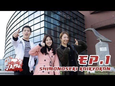 EP.1 - หมู่บ้านเพนกวิน สุดยอดอควาเรียม Shimonoseki Kaikyokan