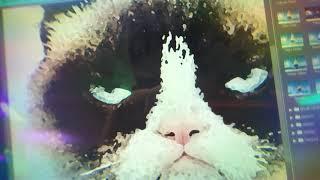 Chills Meets Grumpy Cat