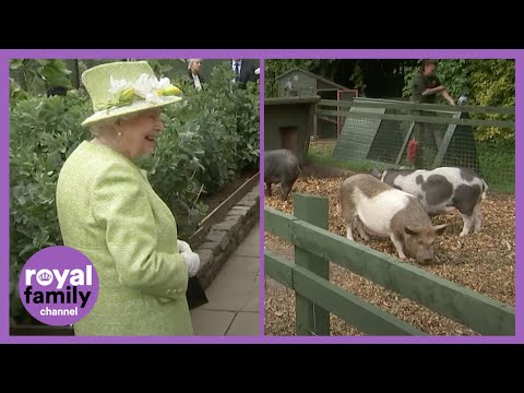 The Queen Laughing at This Piglet is the Best! 🐷😂