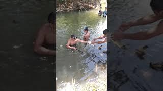 Big Carp Fish Catching Using Speargun Ang laki ng Karpa