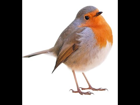 Birds Names In English Pictures Videos Charts Ira Parenting