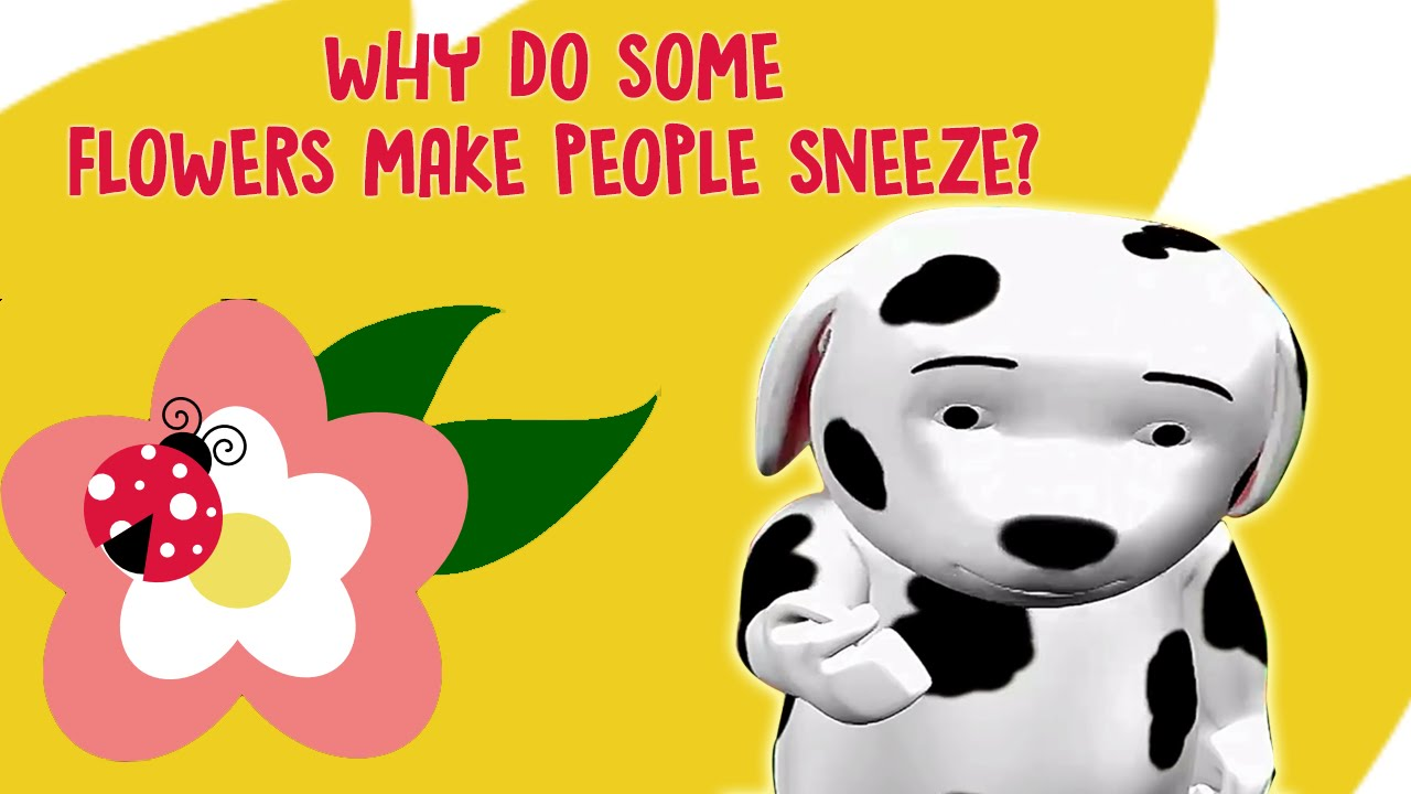 Why do people sneeze