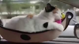Кровать для Кота. Гамак из Китая дешево | aliexpress