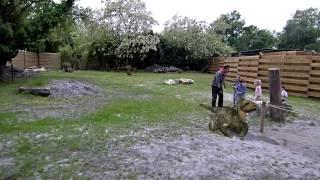 Opération Raptors - Zoo De Bordeaux-pessac