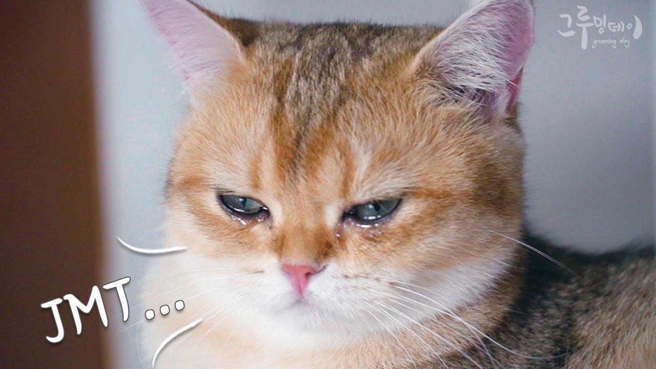 고양이도 맛있는거 먹으면 울어요