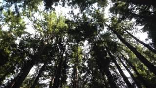 10分間ボディスキャン瞑想(一般社団法人マインドフルリーダーシップインスティテュート) thumbnail