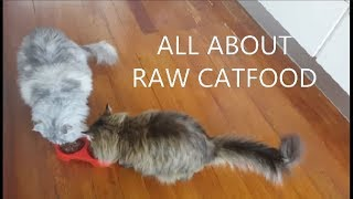 What Do Maine Coons Eat?
