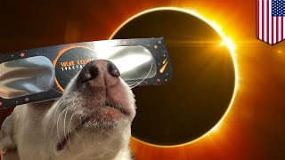 Solar eclipse 2017  Great American Eclipse is going to make animals act all weird   TomoNews