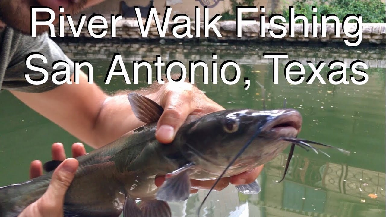 River walk fishing san antonio texas youtube for Fishing near san antonio