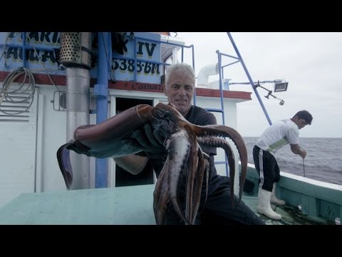 Devil of the Deep - How to Catch a Humboldt Squid