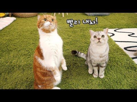 고양이 노을이도 일어나게 하는 궁극의 그것은?!