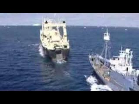 Illegal Japanese whaling filmed by the Australian Government in Antarctica