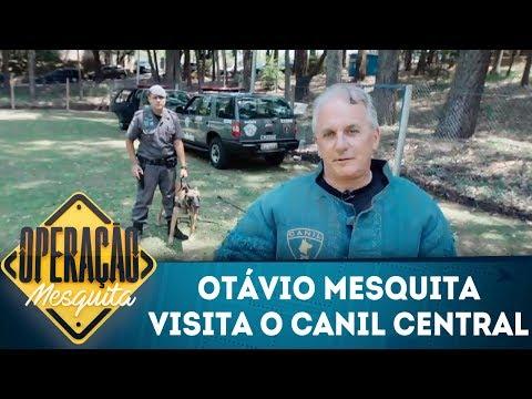 Operação mesquita (26/01/18) |Otávio Mesquita visita o Canil Central