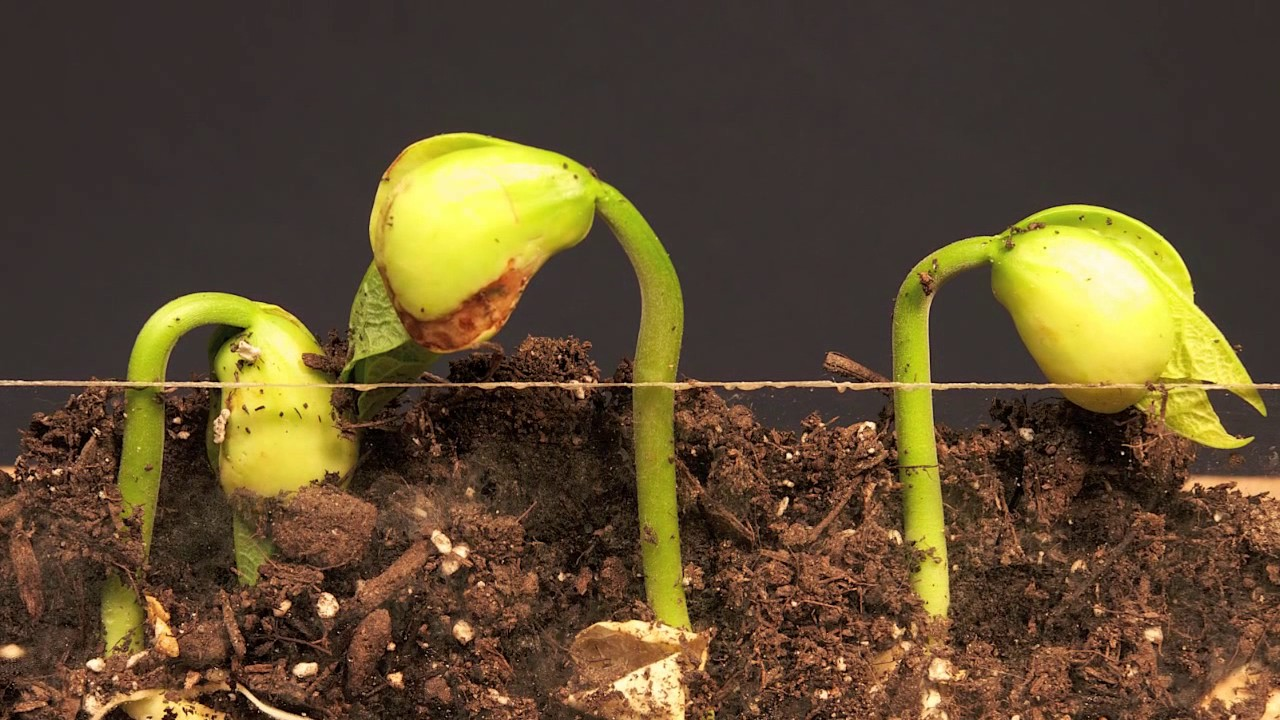 plants growth very very fast how to make your seeds grow faster