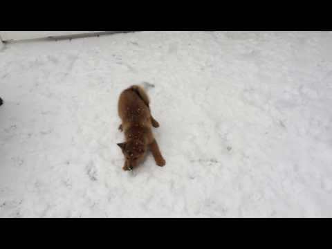Hunter, a finkie, is a Texas native, enjoyed Cleveland's snow (3 months, 2014)