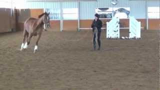 pursi lunging over jumps 1