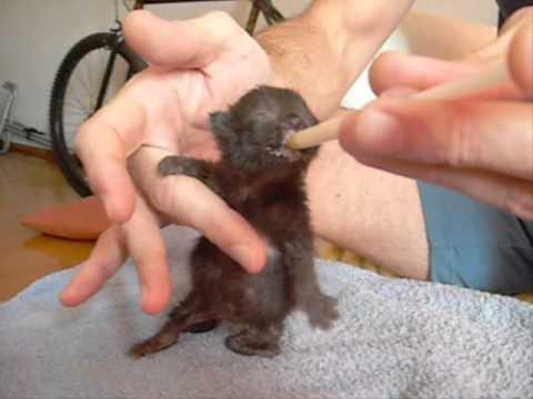 Gatito huérfano muy pequeño chiquito alimentado tomando la leche en mamadera