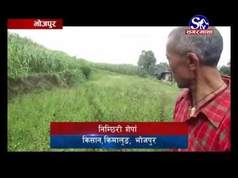 Bhojpur Ma Chiraito -Bhojpur