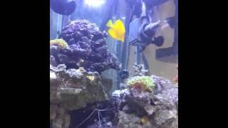 My 40 Gallon Hexagon Reef Tank Update Halide Light