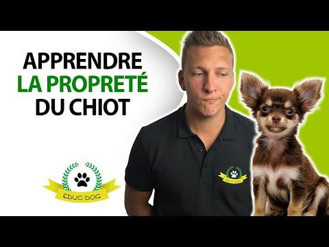 Box De Transport Pour Chien - 10 astuces à connaître - Professionnel - Blog chien