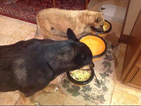 Healthy Dog Gourmet