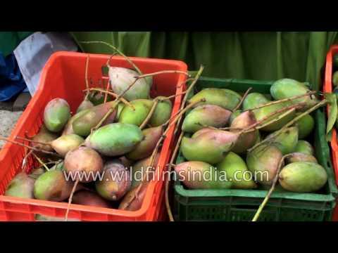 Bangalore host Mango fair