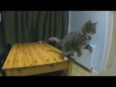 Funny Cats/ Cats Jumping Fail : React Land