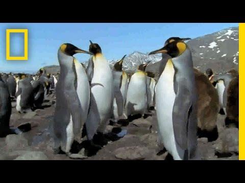 Veja 10 animais que nasceram com raras mutações de cores no corpo - Mega Curioso