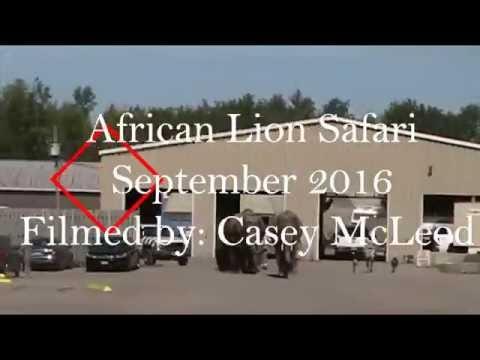 African Lion Safari - Sept 2016 - Filmed by Casey McLeod