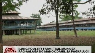 24 Oras: Ilang poultry farm, tigil muna sa pag-aalaga ng manok dahil sa pagkalugi