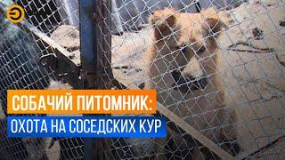 Жители садового общества жалуются на незаконный собачий приют