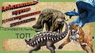 Действительно крутые доисторические животные. Познавательный ТОП №11.