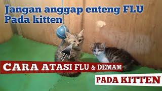 Cara cepat obati flu dan demam pada kitten (anak kucing)
