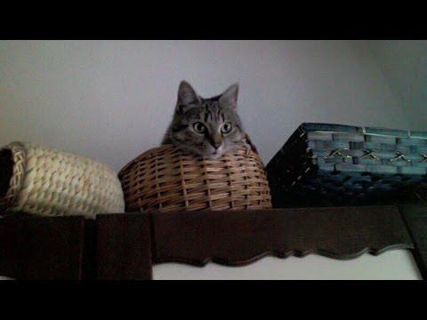 cat vs. vacuum cleaner, gatta ama aspirapolvere