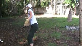 Dog Training, Frisbee Training Featuring Boudicca Jack Russell Terrier