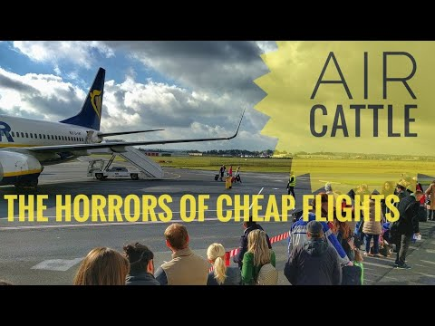 Air Cattle: the horrors of cheap flights