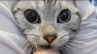 水かけられたパニック顔の猫~ヘッドロックで逃げられない - Panic cat when pouring water on my cat