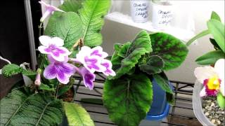 Plant Stand Update - May 5, 2013