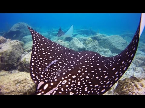 The remarkable marine life of the British Virgin Islands