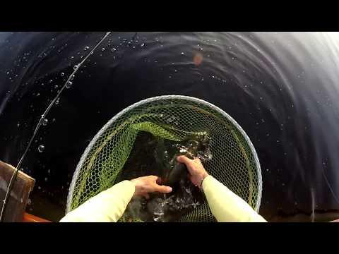 Caenis Fishing Lough Corrib 2016